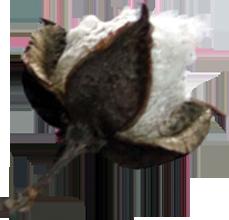 coton-equitable