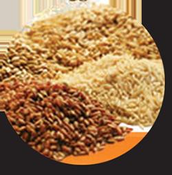 riz-equitable