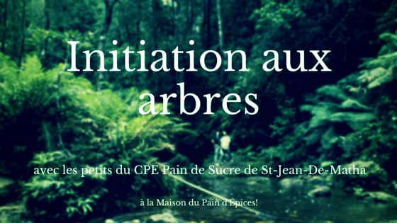Initiation aux arbres (2) (1)